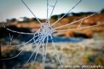 spiders web frozen ireland jan2010
