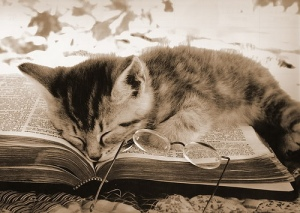 blog_cat