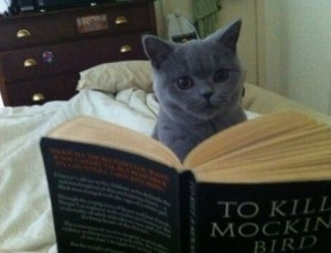 Top-10-Images-of-Cats-Reading-Books-7