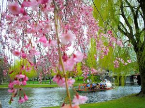 Boston Common in Spring
