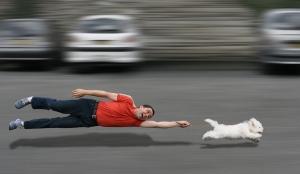 7.10.14-Dog-Activity