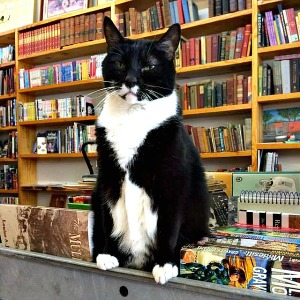 library_cat_charlotte