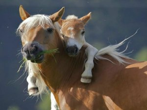 give-your-mom-a-hug-pony-wants-piggyback-ride-from-mom