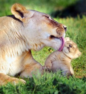 the-love-of-motherhood-in-the-animal-kingdom-4
