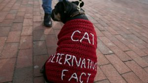 Boston, MA -- 2/19/2017 -  A dog named Louis Vuitton wears an Alternative Fact sweater as scientists, science advocates and community members rally in Copley Square.  (Jessica Rinaldi/Globe Staff) Topic: 20scientists Reporter: