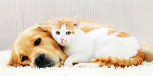 cats-and-dogs-1