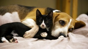 intimate-wallpapers-of-cats-and-dogs-06
