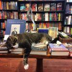 Bookstore cats2