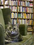 Bookstore cats3