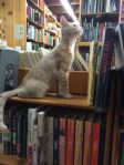Bookstore cats5