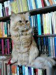 Bookstore cats8