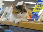 Addison Nash, University of Science and Arts of Oklahoma librarycat