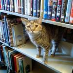 Catniss Evergreen, Akron Carnegie Public Library, Akron,Indiana