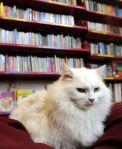 Mimi the Blueskin Bay library cat, Dunedin, NewZealand