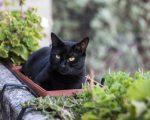 national-black-cat-appreciation-day-640×514