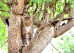 CANS-Why-Do-Cats-Get_Stuck-In-Trees-1083390704