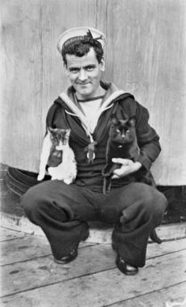Sailor on board the HMAS Melbourne holding two ship's cats, 1917I