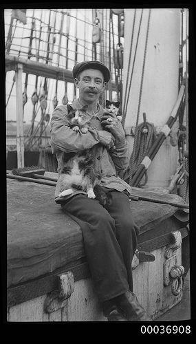 Seaman with a cat and kitten, c 1910, Australian Maritime Museum
