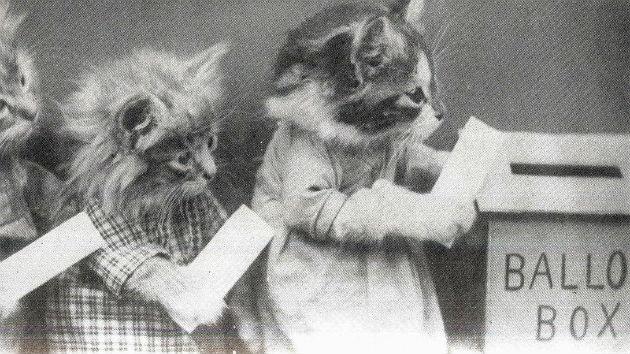 catsvoting2