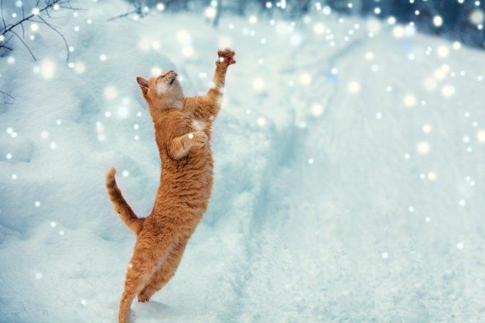 cat-snow-9