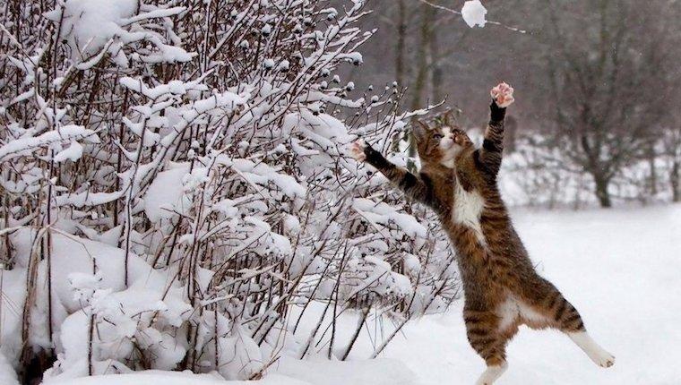 Cat_Versus_Snow_Featured
