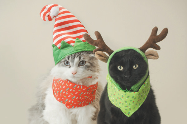 Two-cats-dressed-up-in-holiday-outfits
