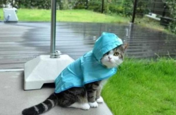 Top-10-Images-of-Cats-Avoiding-The-Rain-10-510x334-1