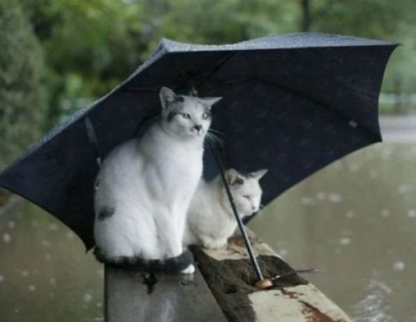 Top-10-Images-of-Cats-Avoiding-The-Rain-9-510x395-1