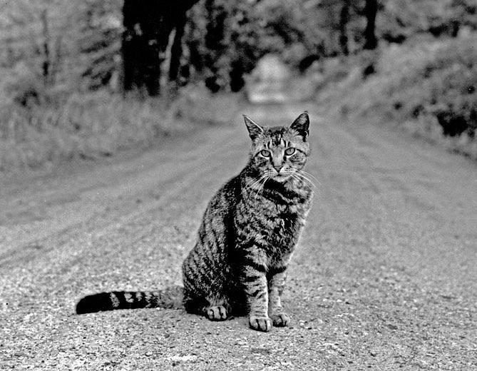 walter-chandoha-cat-photography-inspiration-16