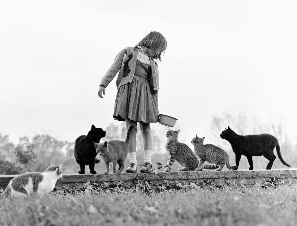 Walter-Chandoha-cats8