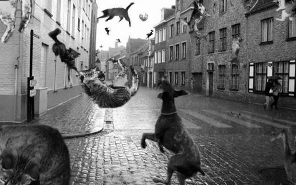 raining-cats-dogs-4-590x368