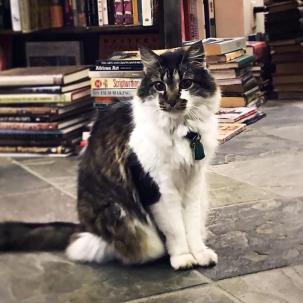 Isabel, Crescent City Books, New Orleans, LA