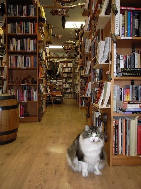 Kat's Book Nook, Bemidji, MN