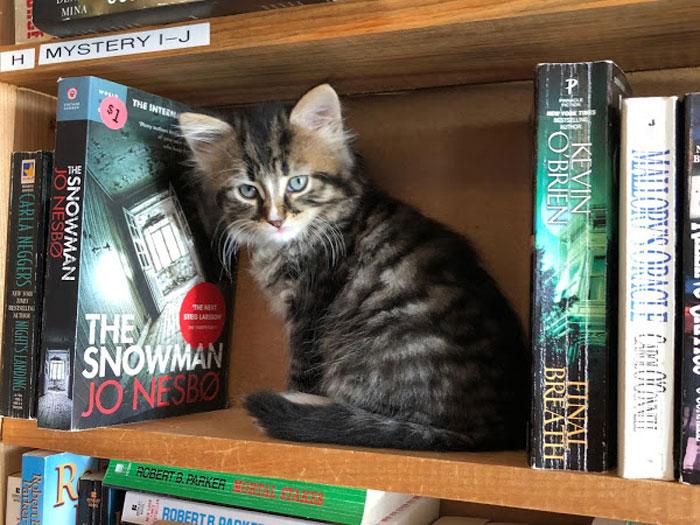 otis-clementines-books-coffee Halifax, Nova Scotia where you can adopt a kitten