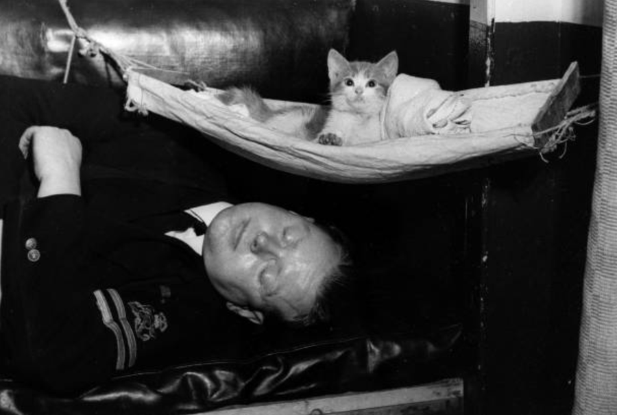 HMS Warspite asleep with the ship's mascot kitten in its hammock, 1944.