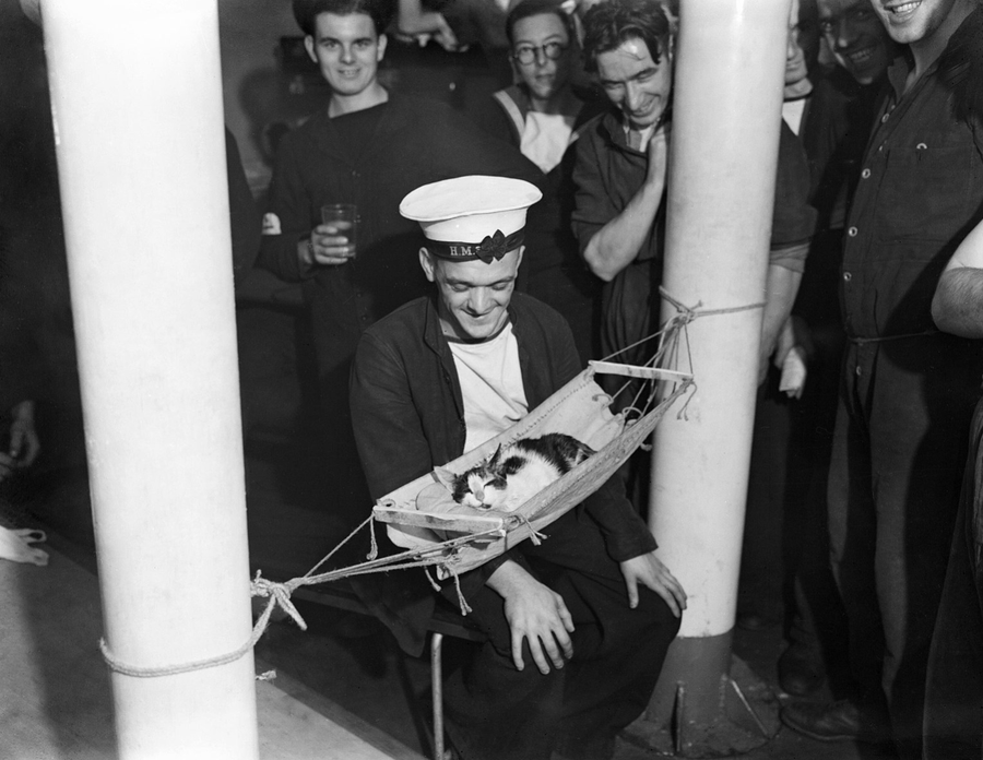 sailors of the HMS Hermione in 1941 surrounding their sleeping cat, Convoy.